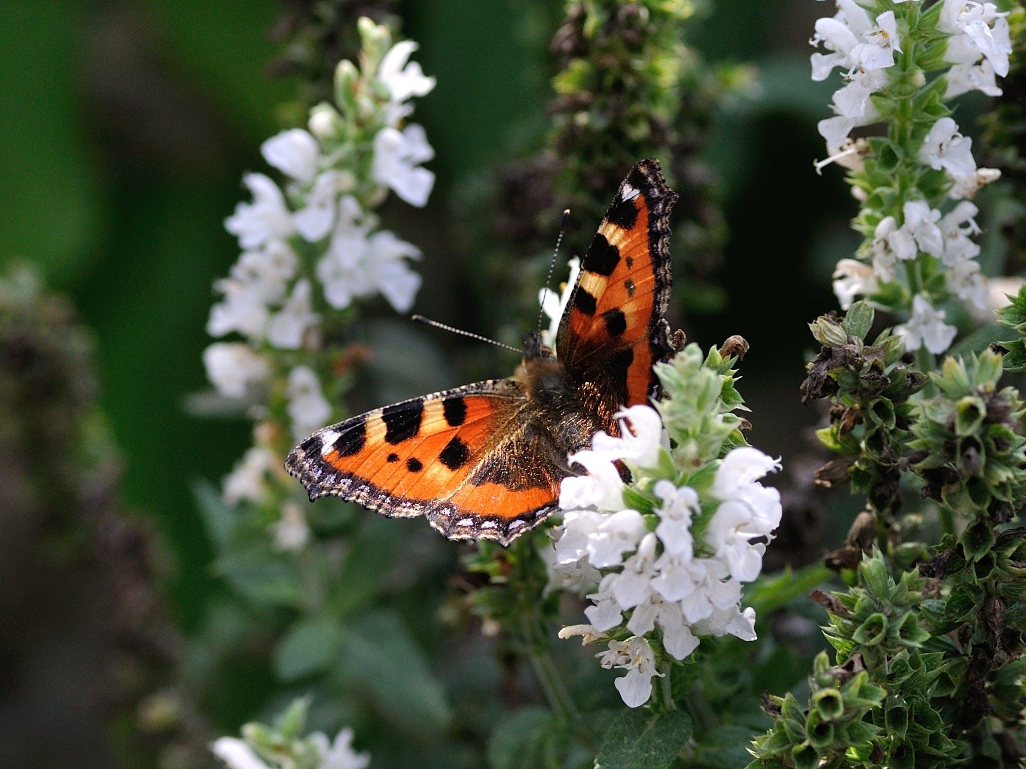 Orange Black and White Butterfly on White Petal Flower