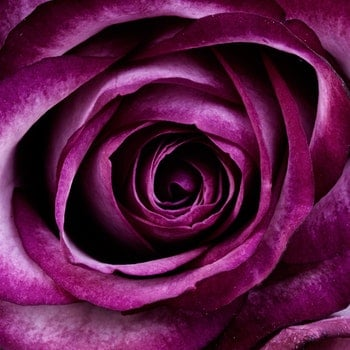 Closeup Photography of Purple Petal Flower