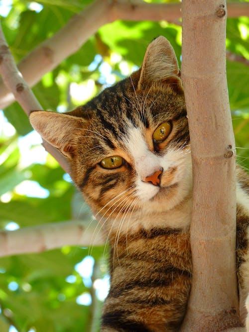 Evcil Hayvan, hayvan, hayvan fotoğrafçılığı, kedi içeren Ücretsiz stok fotoğraf