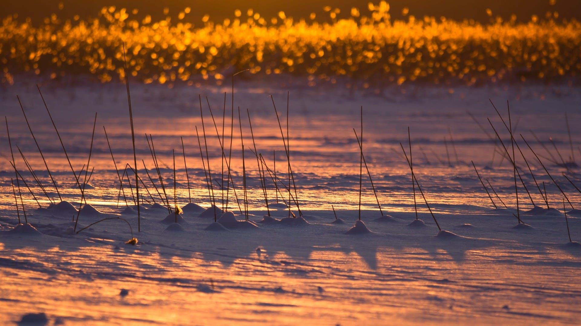Free stock photo of snow, nature, sunset, winter