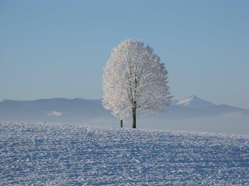 Photos gratuites de arbre, froid, gel, givré
