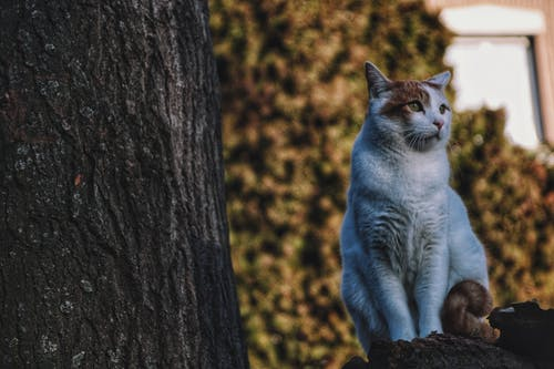 Free stock photo of cats