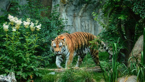 ジャングル, ハンター, フラワーズの無料の写真素材