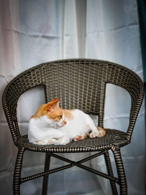 Ilmainen kuvapankkikuva tunnisteilla eläin, kissa, koti