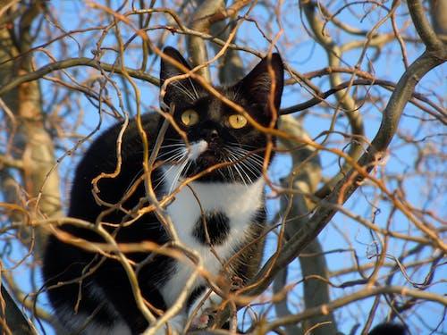 Základová fotografie zdarma na téma domácí mazlíček, kočka, kočkovití, strom