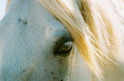 Eye of purebred horse in sunlight