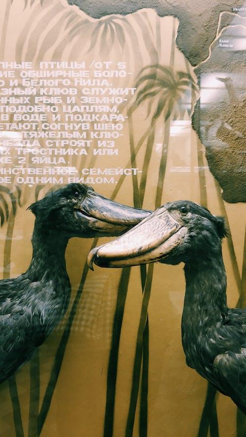 アート, エキゾチック, エレガント, トロピカルの無料の写真素材