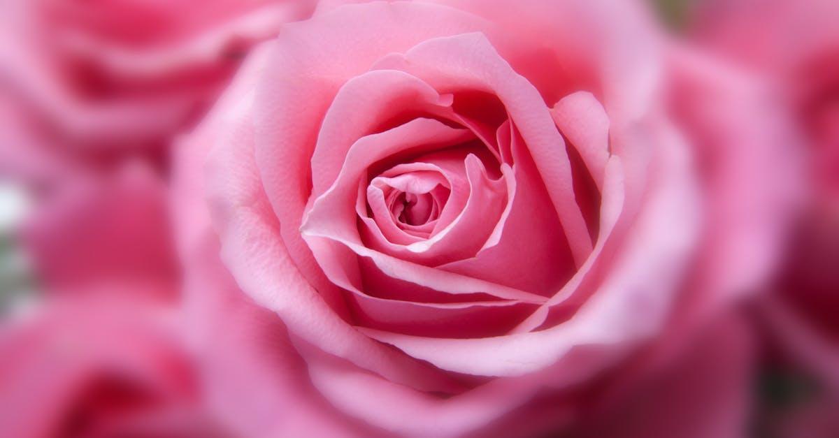 Картинки цветы розовые