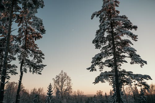 Low angle of coniferous and deciduous trees growing in forest under cloudless sky at sunrise