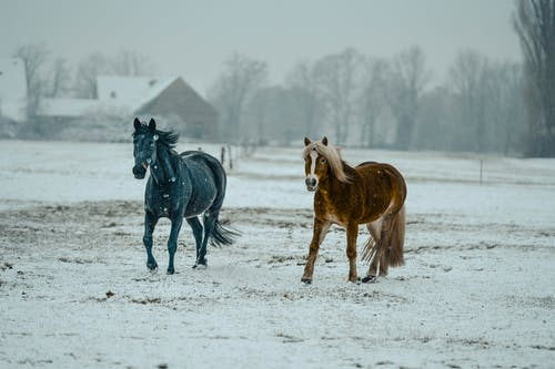 Free stock photo of action energy, black horse, cavalry, cold