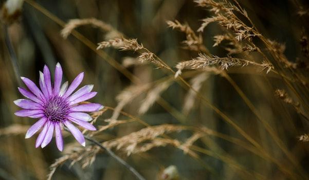 Purple Petaled Flower Macro Photography