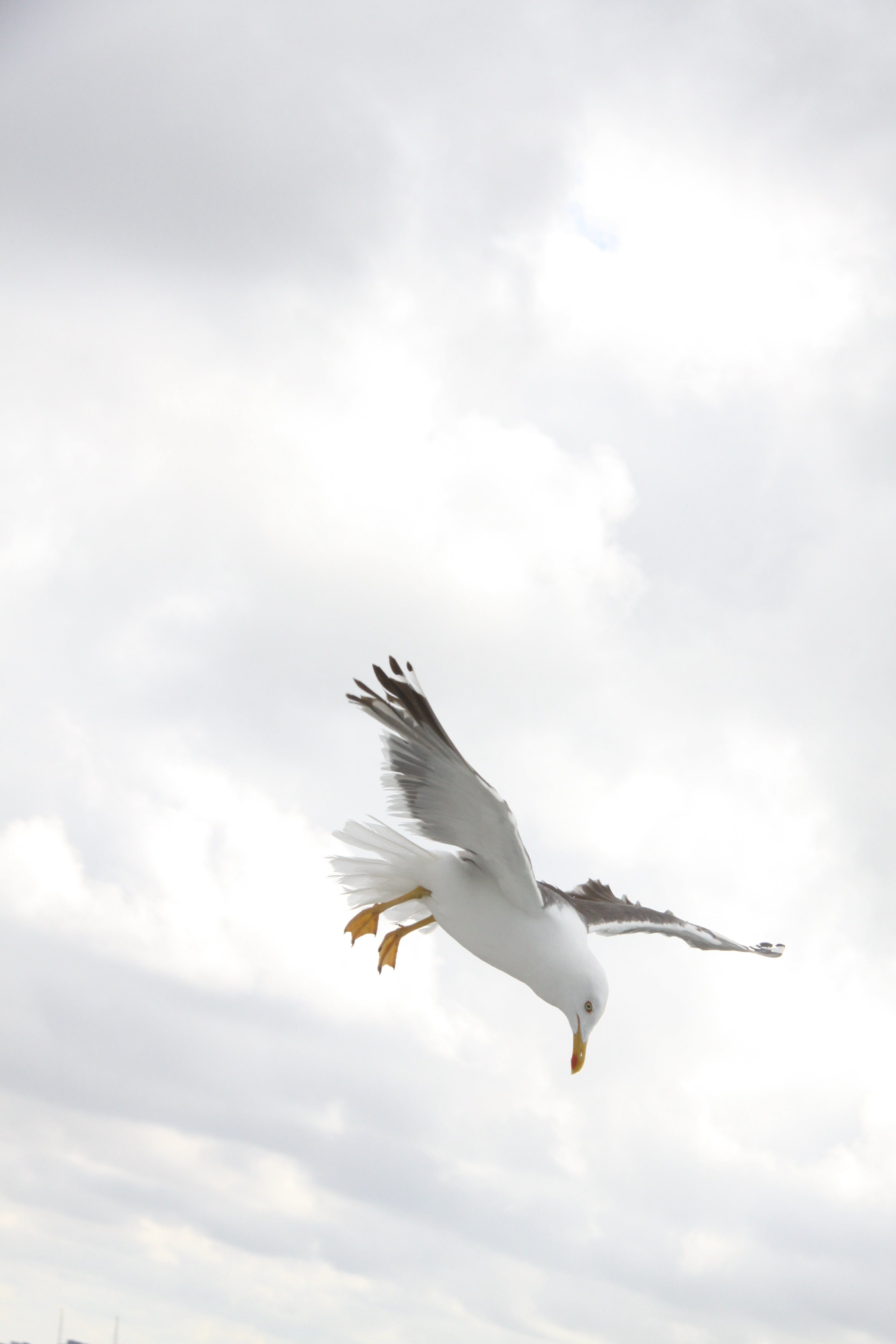 Sea Gull on Flight during Daytime