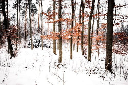 Thin tree branches with bright leaves growing on white snowy ground with dried twigs in woods on cold winter day