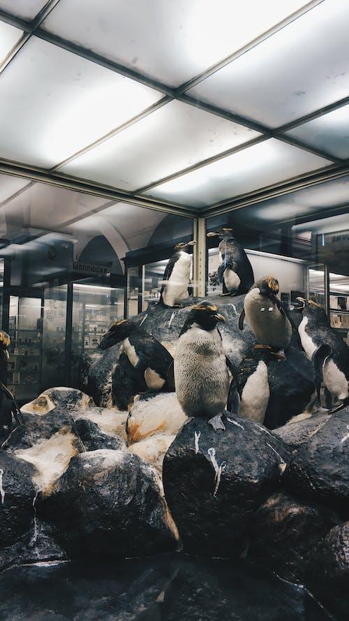 アイス, インドア, コールド, ペンギンの無料の写真素材