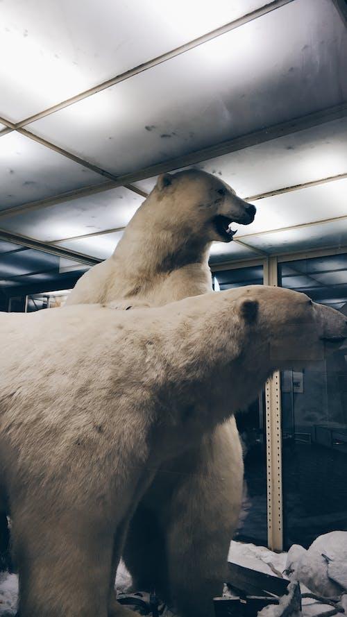 コールド, 冬, 動物, 動物園の無料の写真素材