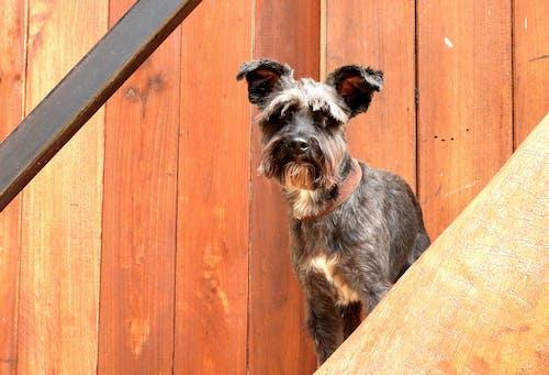 Foto profissional grátis de mascota, perro