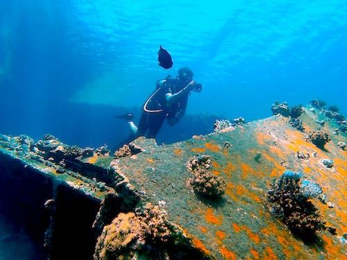 Man in Black Diving Suit Diving on Water