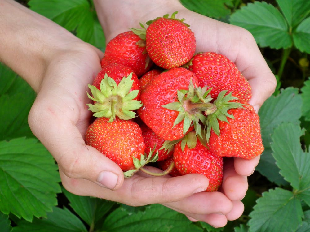 jahody, jídlo, organický