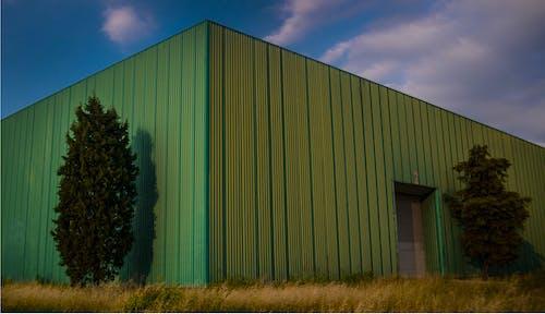 Kostenloses Stock Foto zu baum, flugzeughalle, grün