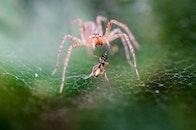 insects, macro, cobweb