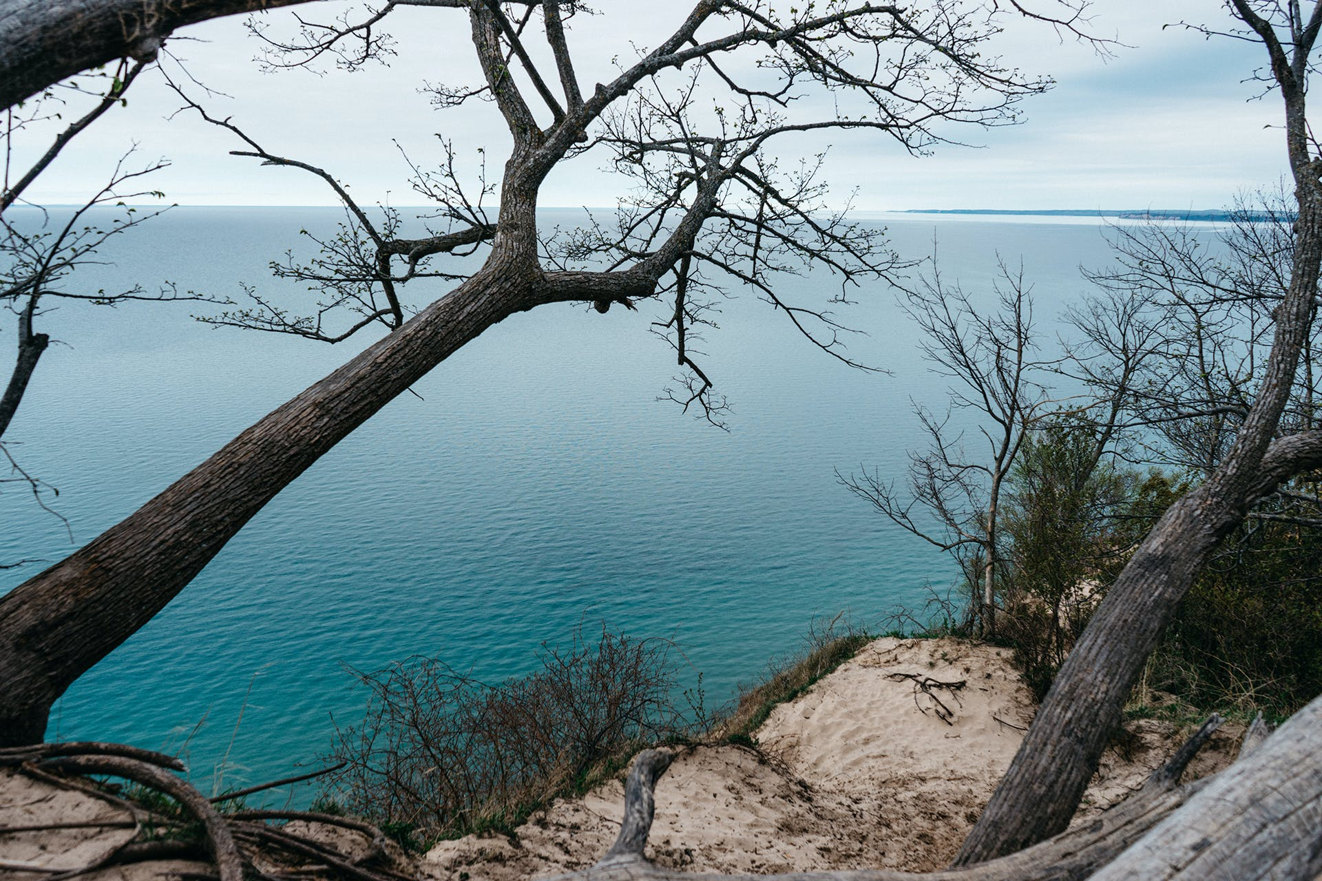 Bare Tree Near Blue Ocean