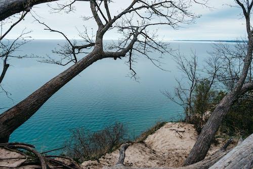 Foto stok gratis jurang, laut, pohon, tebing