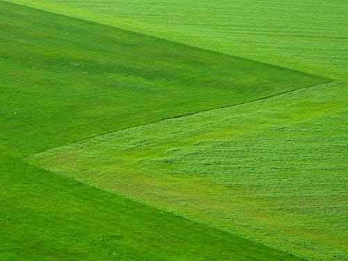 Δωρεάν στοκ φωτογραφιών με αλέθω, γήπεδο, γρασίδι, πράσινος