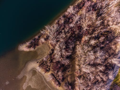 Aerial View of Green Trees and Brown Sand