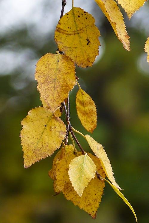 Foto profissional grátis de close, filial, floresta, folhas secas