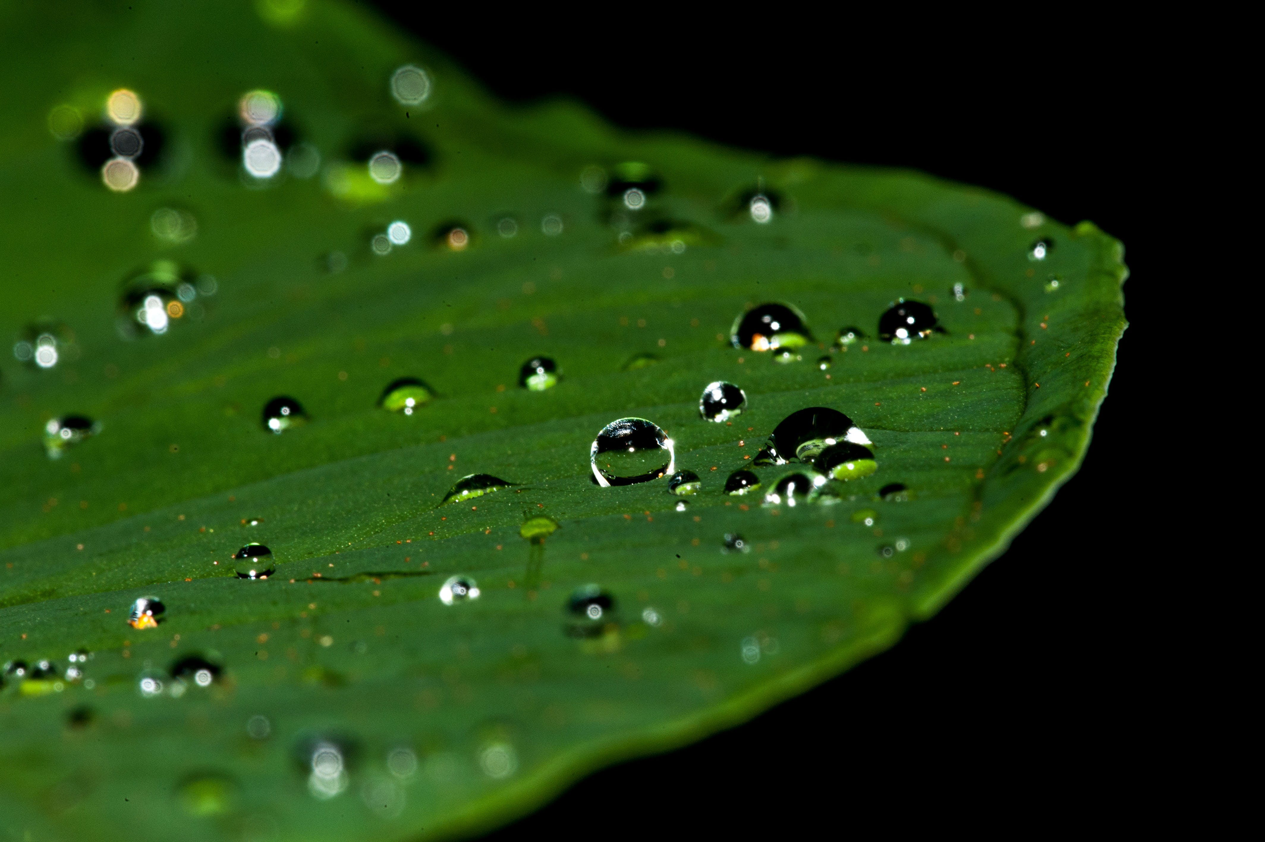Close Photograpy of Leaf With Water Drop