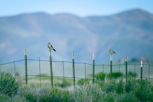 Adorable birds sitting on bars of simple fence located on lush grassy meadow in mountainous valley on sunny day