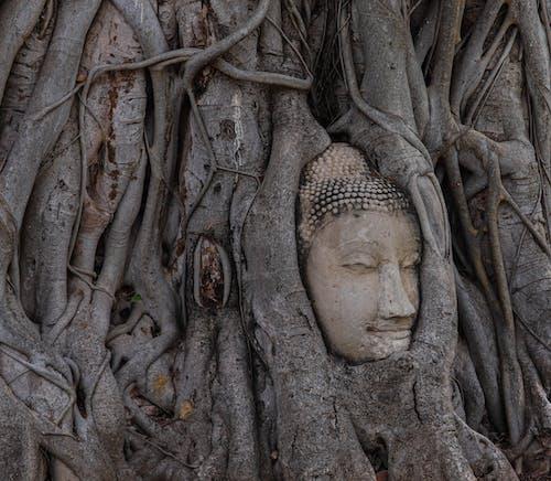 Ảnh lưu trữ miễn phí về bình yên, cái đầu, cây