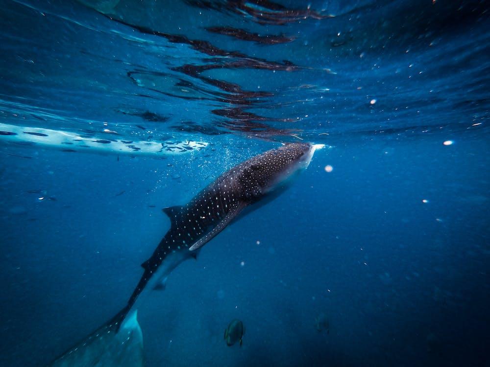Fotos de stock gratuitas de acuario, agua, bajo el agua