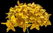 nature, flowers, yellow