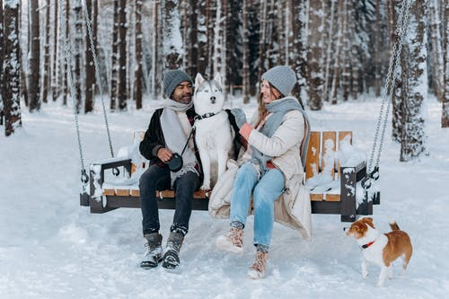 Woman in White Jacket Sitting on Brown Wooden Bench Beside White and Brown Dog on Snow