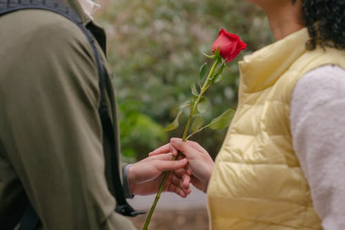 Side view of crop faceless man giving red rose to girlfriend while having romantic date in street and standing near each other in daytime near green plants and bushes