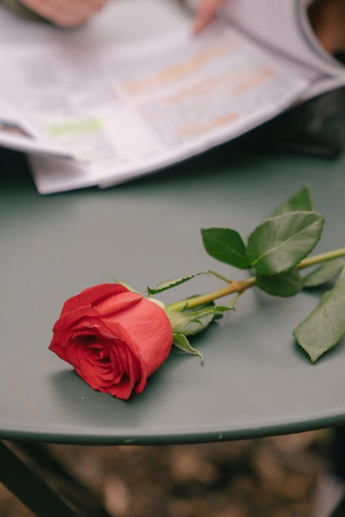 Rose on table near anonymous person with textbook and papers