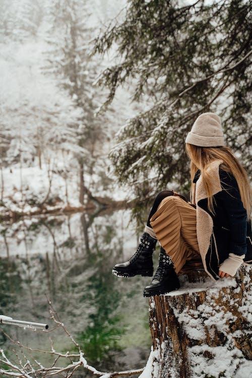 Free stock photo of adult, arctic nature, background image
