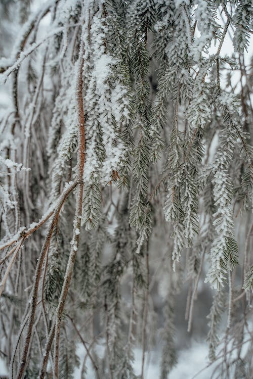 Free stock photo of 4k wallpaper, android wallpaper, cold, frozen