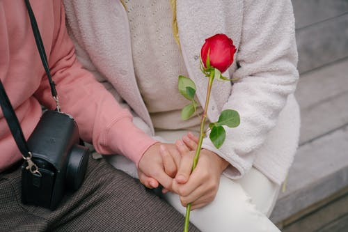 Crop Photo Of A Couple Sitting On A Bench With Red Rose