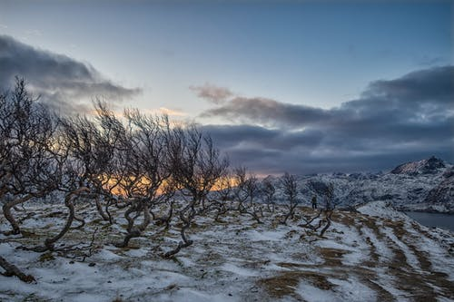Leafless Tree on Snow Covered Ground Under Cloudy Sky