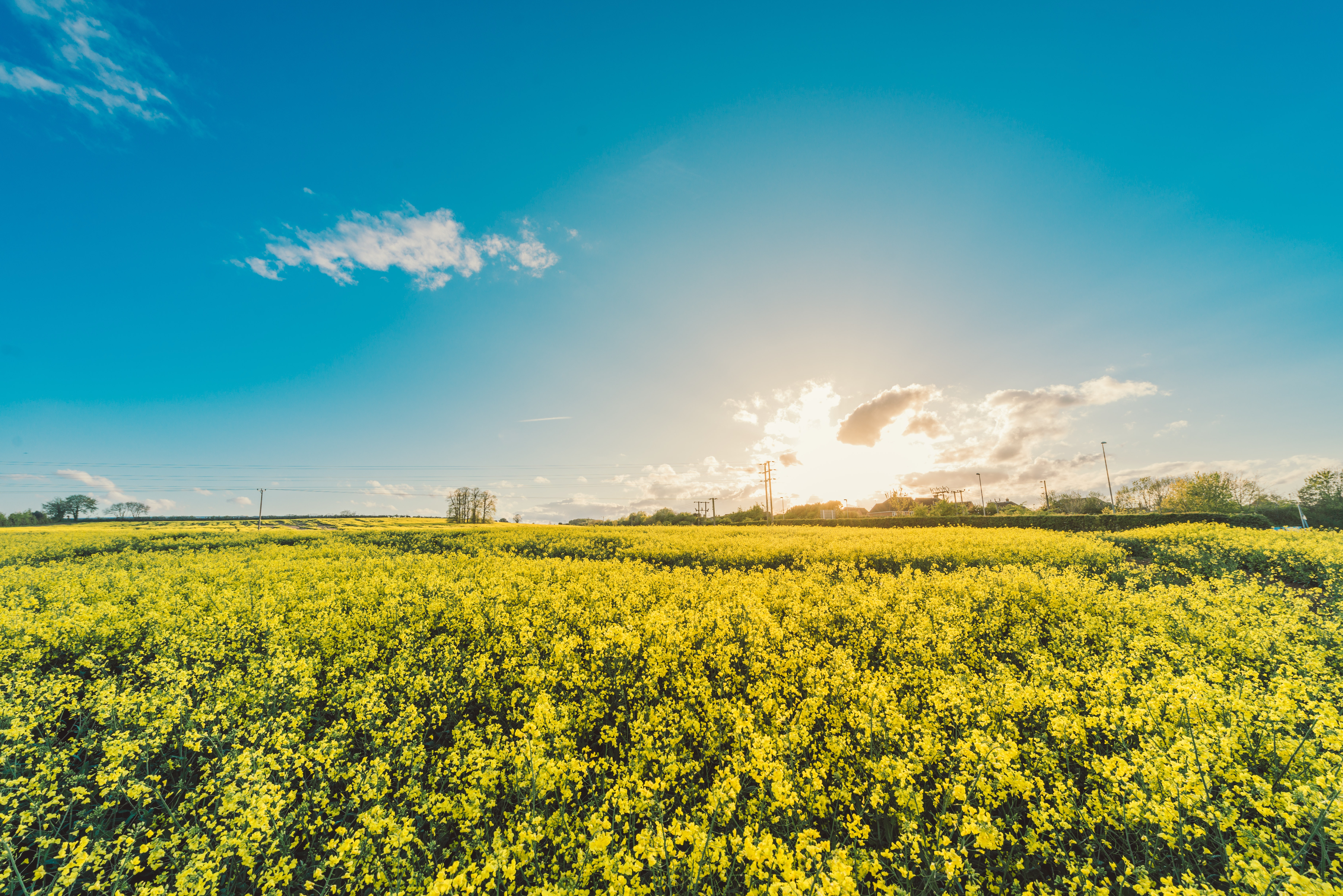 Yellow Flower Field Under Blue Cloudy Sky During Daytime Free