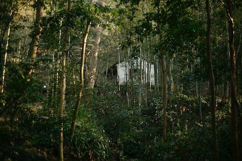 Darmowe zdjęcie z galerii z 丛林, 房屋