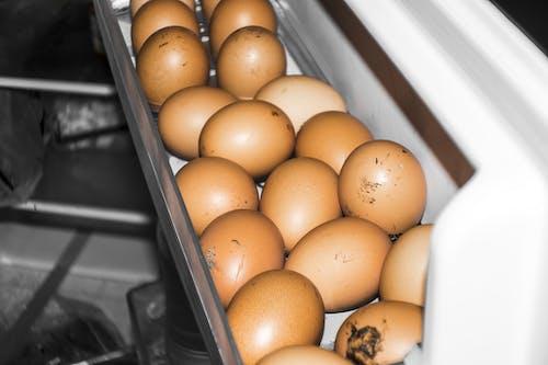 Ảnh lưu trữ miễn phí về những quả trứng tươi, trứng nâu