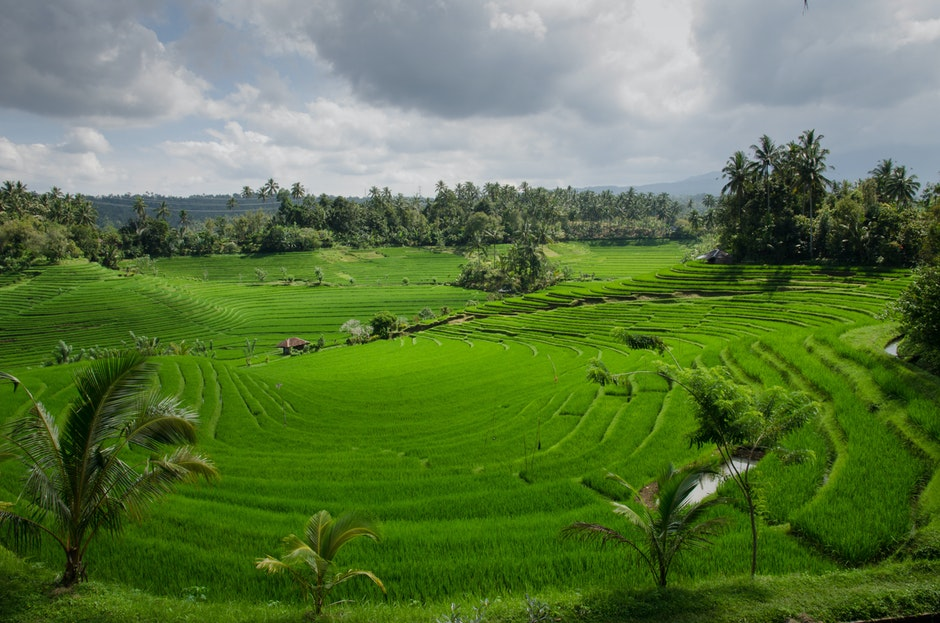 agriculture, asia, bali