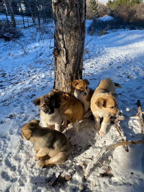 Free stock photo of dog puppies, offspring, snow