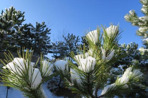 Glas, 冬季, 樹 的 免费素材图片