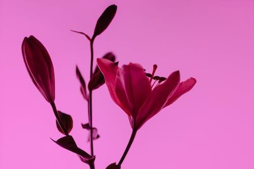 Free stock photo of art, beautiful, blooming