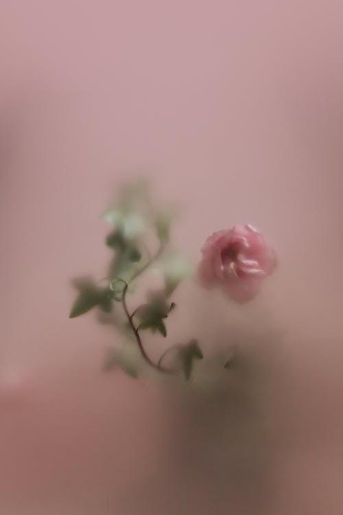 Ilmainen kuvapankkikuva tunnisteilla juomalasi, kukka, läpikuultava