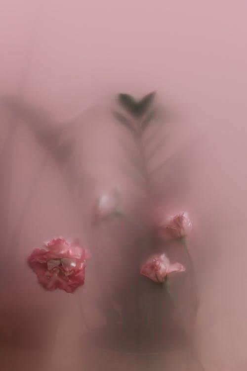 Ilmainen kuvapankkikuva tunnisteilla juomalasi, kukat, läpikuultava